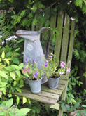 Galvanised jugs etc as planters