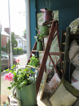 Shop window plant display